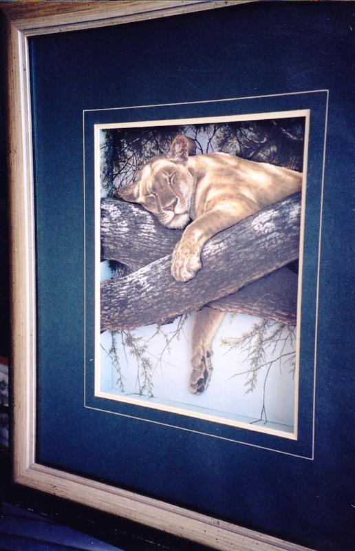 Sleeping Lioness