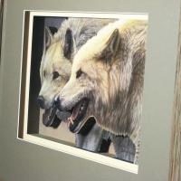 White Artic Wolves